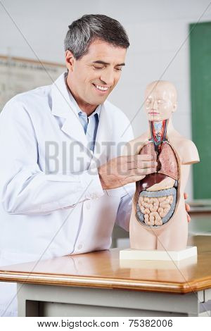 Mature male teacher smiling while examining anatomical model at desk in classroom