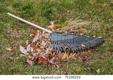 Leaf Rake And Leaf Pile