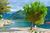 picture of yugoslavia  - The scenic view on the Kotor bay surrounded by high mountains with the small pine on the foreground Perast Montenegro - JPG