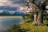 foto of pain-tree  - Scenic view of a huge old tree staring on the sunlit shore in Torres del Paine National Park - JPG