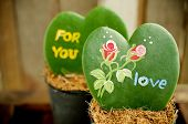 pic of paint pot  - Heart shaped plant  - JPG