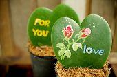 foto of paint pot  - Heart shaped plant  - JPG
