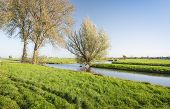 foto of early morning  - Colorful Dutch polder landscape with trees and water early in the morning on a sunny day in the fall season - JPG