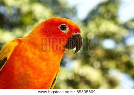 colorful parrot in the park