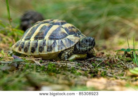 Young Turtles From The Wild Nature