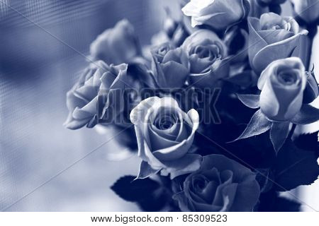 Beautiful roses in black and white