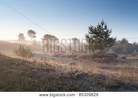 Misty Summer Sunrise