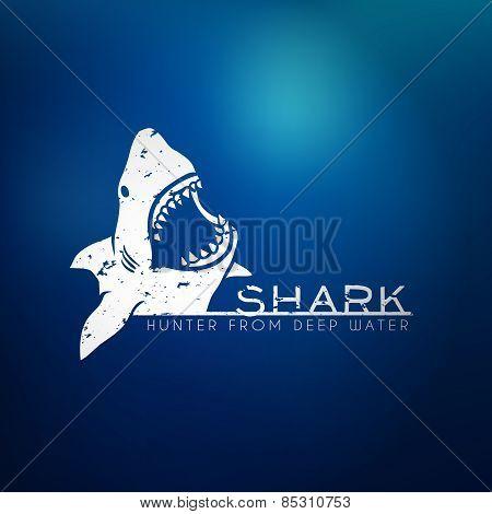 Shark concept