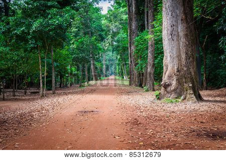 Dirt Road Through Dense Rainforest In Cambodia