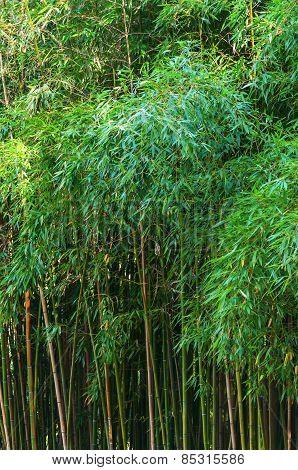 Green High Bamboo