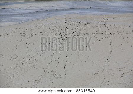 Traces In The Wadden