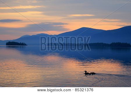 Family of Ducks Takes Swim at Sunrise on Lake George, NY Adirondacks