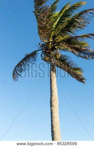 Beach scene on a beautiful tropical island