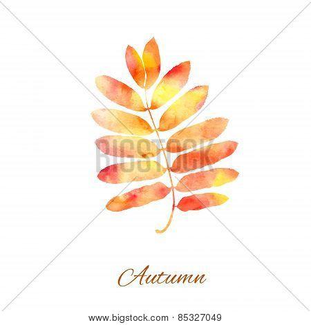Rowan leaf autumn