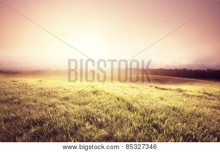 fog on meadow