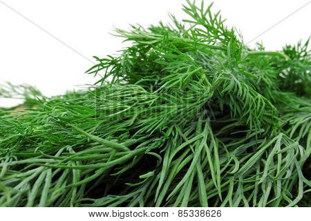 Many Branches Of Dill