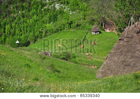 Small Farm In The Mountains