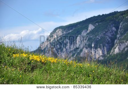 Yellow Spring Flowers In The Mountains