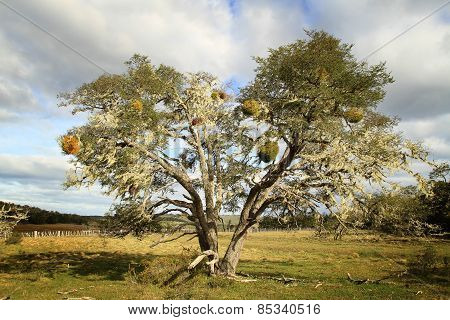 Old tree in Terra del Fuego