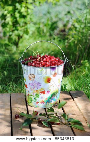 Ripe Fresh Cherries In A Colored Bucket And Ripe Cherries With Leaves Outdoor
