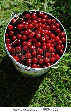 Colored Bucket Of Cherries On A Wooden Table Outdoor