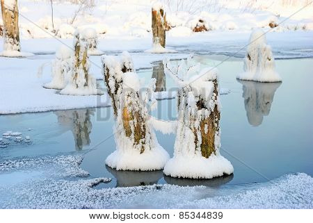 Dry Tree Stumps Covered With Snow On Frozen Pond
