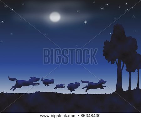 Animals by night