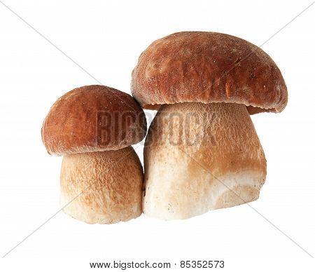 Porcini Mushrooms. Cep On White Background