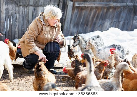 happy adult woman cares little goats and chickens