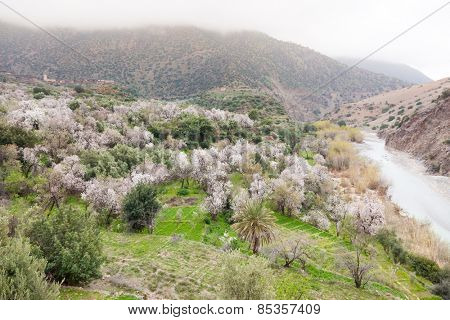 North african mountain valley in springtime. Green meadow, blooming trees, river and small village. High Atlas, Morocco, Africa.