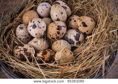 Quail Eggs In  Nest Close-up