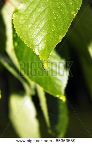 Garden Plants Are In Raindrops
