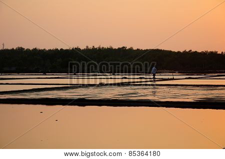 Sunset on a rice paddy