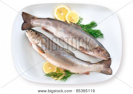 Trout fish with fresh lemon and herbs on plate