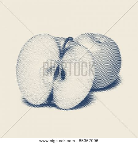 Vector engraved style one color illustration, apple and a half