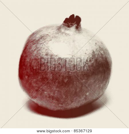 Vector engraved style one color illustration, full pomegranate