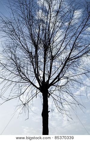 Black Silhouette Of Small Leafless Tree On Cloudy Sky