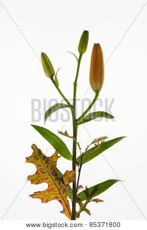Floral bouguet