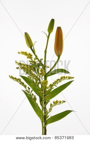 Flower bouguet