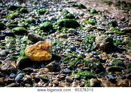 Lonely Orange Rock In A Sea Of Green