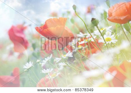 Abstract Floral Background With Poppies. Flowers With Color Filters