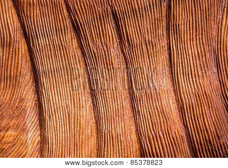 Deep Lined Carved Red Wood Texture Background