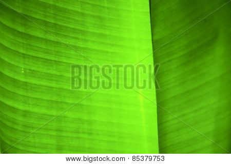 Thailand  Light  Abstract Leaf And  Green  Black   Kho Samui Bay