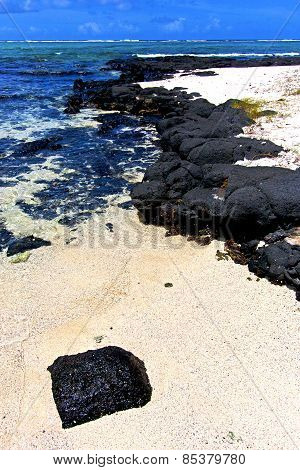 The Zanzibar Beach  Seaweed In     Sand Isle   Sky And Rock