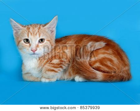 Red And White Kitten Lying On Blue