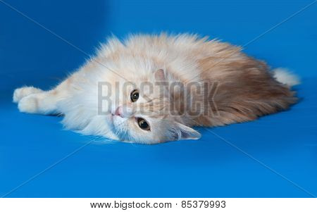 Fluffy Red Smoky Cat Sits On Blue