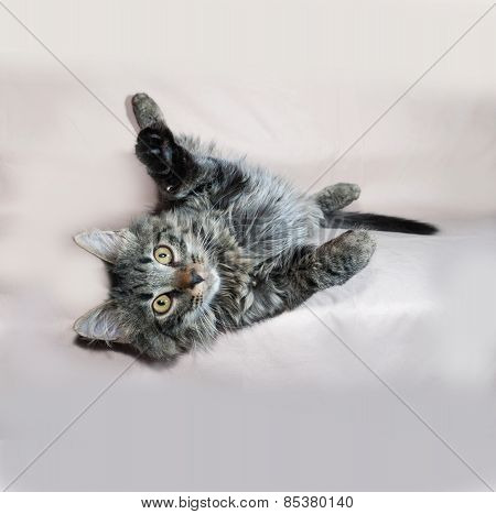 Fluffy Tabby Siberian Kitten Lying On Brown