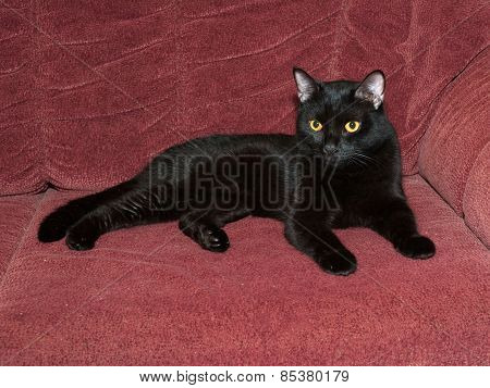 Black Cat Lying On Couch
