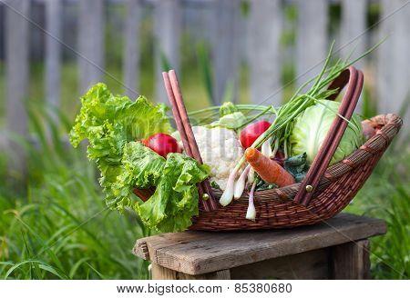 Fresh Organic Vegetables In The Basket