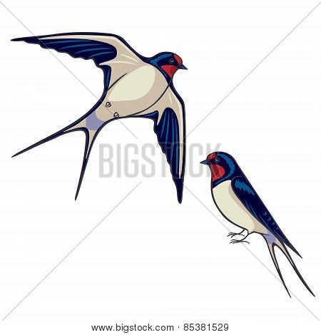 Two Swallows